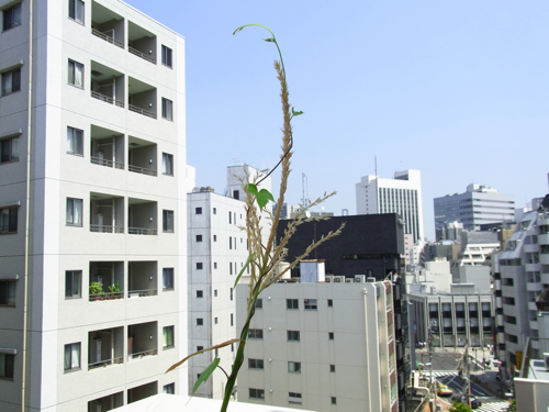 500_tsuyoi_100824-2.jpg
