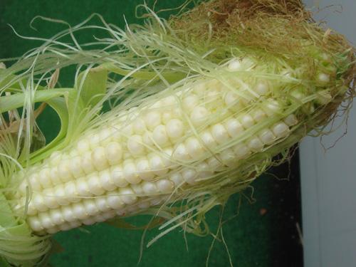 corn0714-04-big.jpg