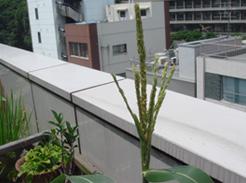 corn0717-05.jpg