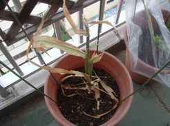 corn080810B-01.jpg