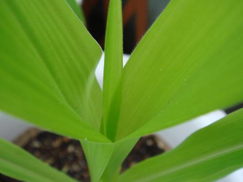 corn090712TOP.jpg