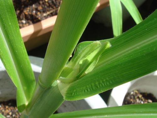 corn090729-4.jpg