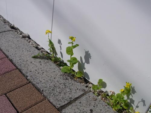 花ゲリラ2010春.jpg