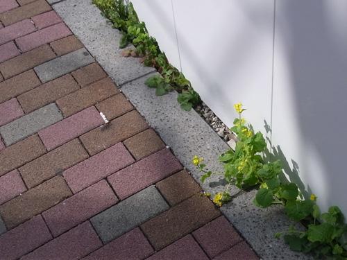 花ゲリラ2010春