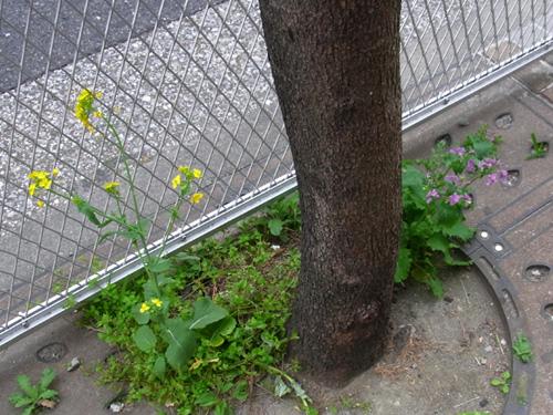 花ゲリラ2011春.jpg