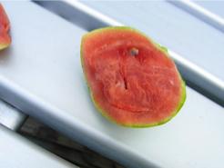 ベランダでスイカ栽培